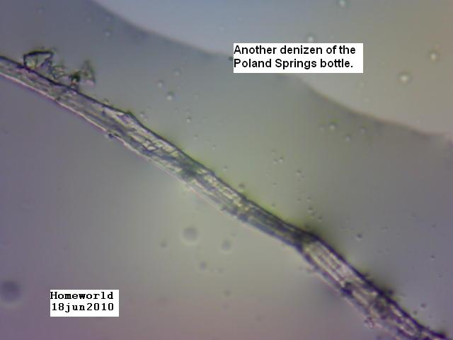 Morgellons fiber in bottled water